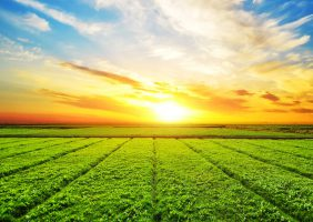 blog agricultura IAE